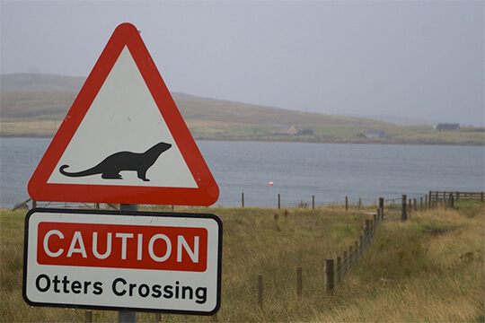A sign for otters crossing the road