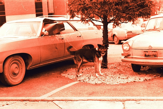 Dog and a car
