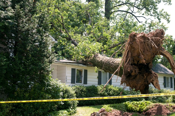 A tree fallen on a house